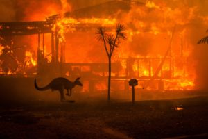 In Pictures: Australia Wildlife Leaves Destruction But Rain Brings Relief