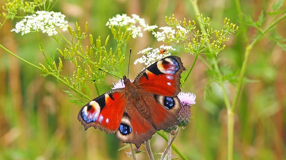Love butterflies, Then Definitely Visit Famous Butterfly Parks in INDIA
